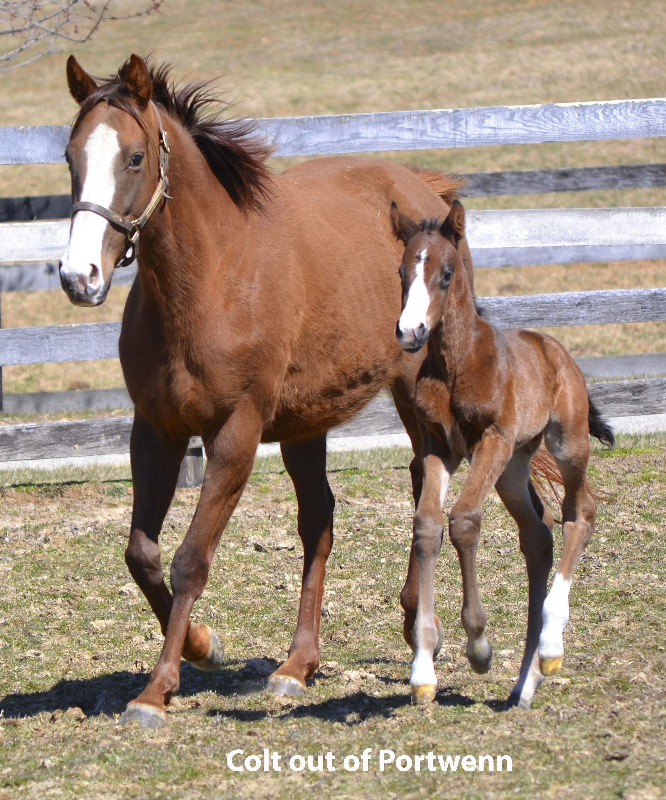 Foals of 2018 - Maryland Horse Breeders Association