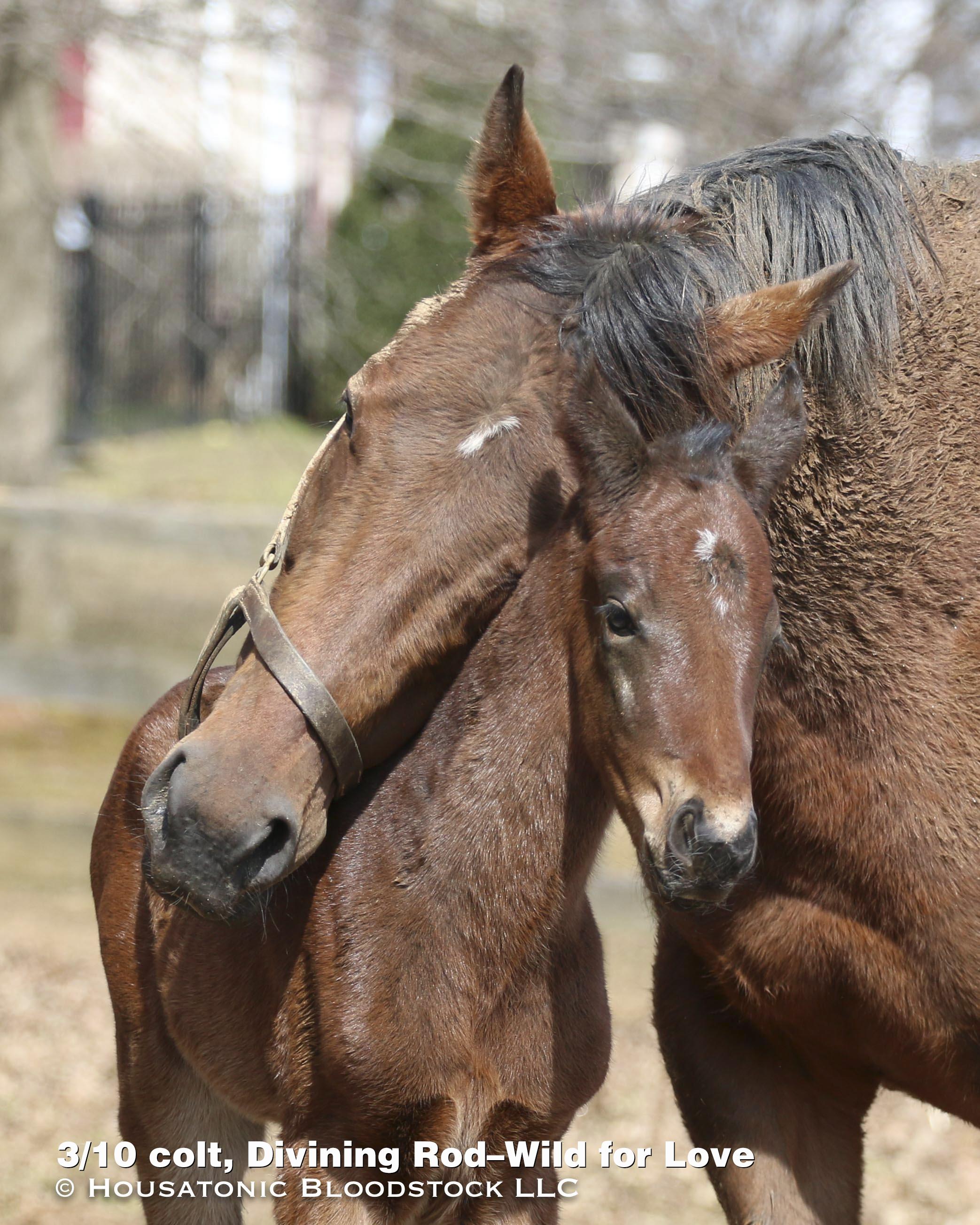 MD Breds - Maryland Horse Breeders Association