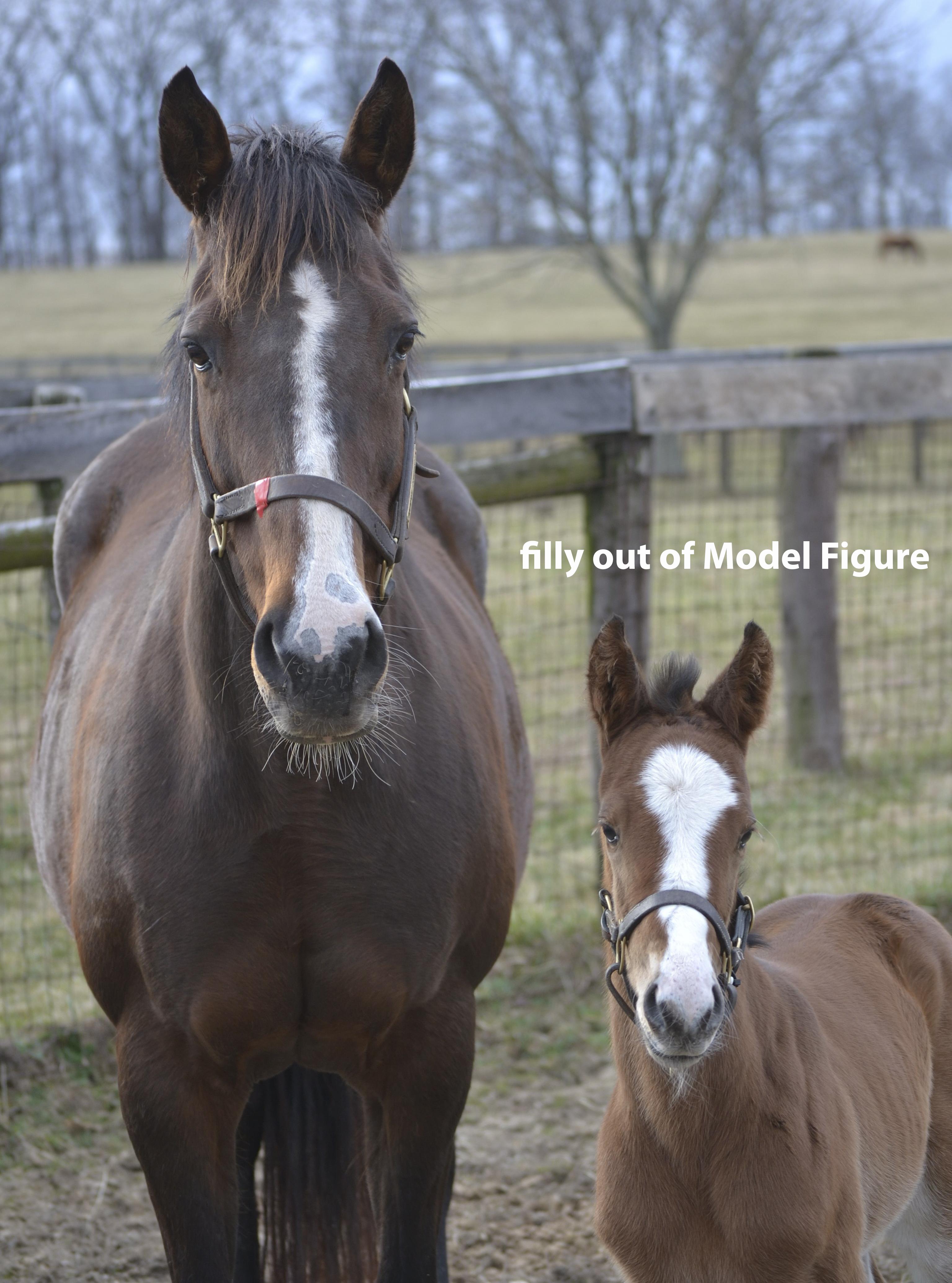 foals - photo #26