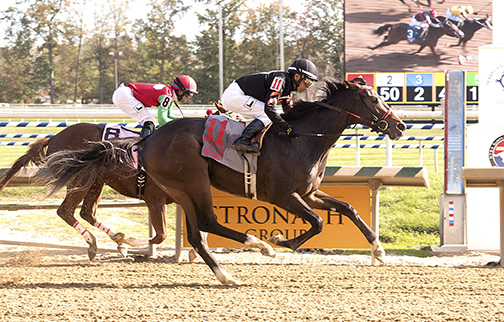 Limited View winning 2017 Maryland Million Lassie