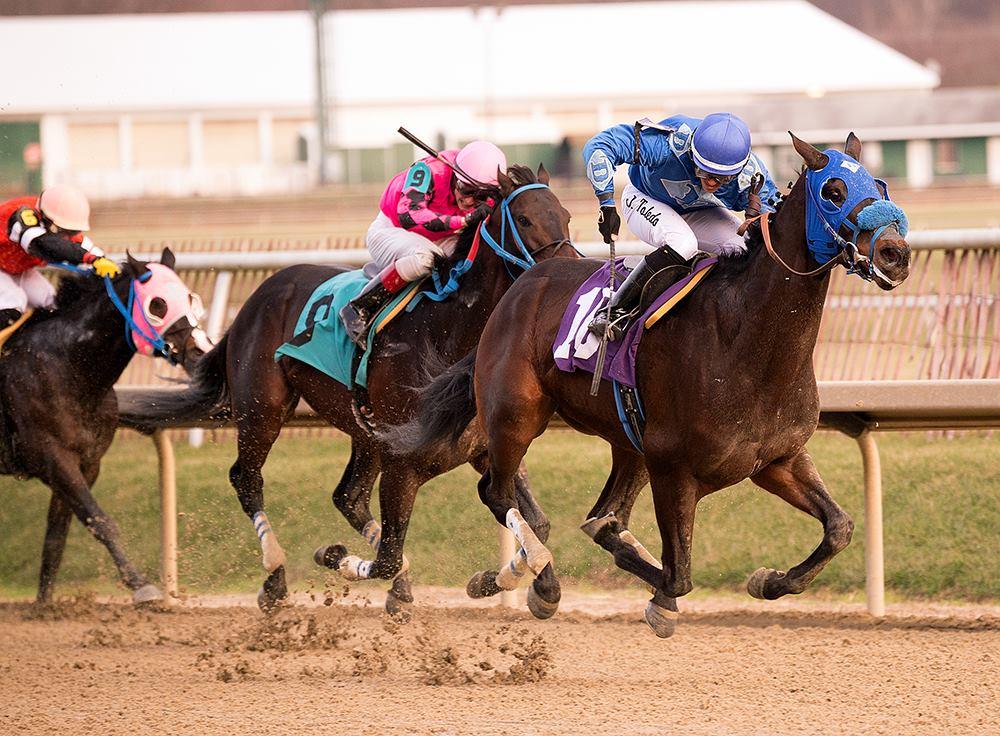 Home - Maryland Horse Breeders Association