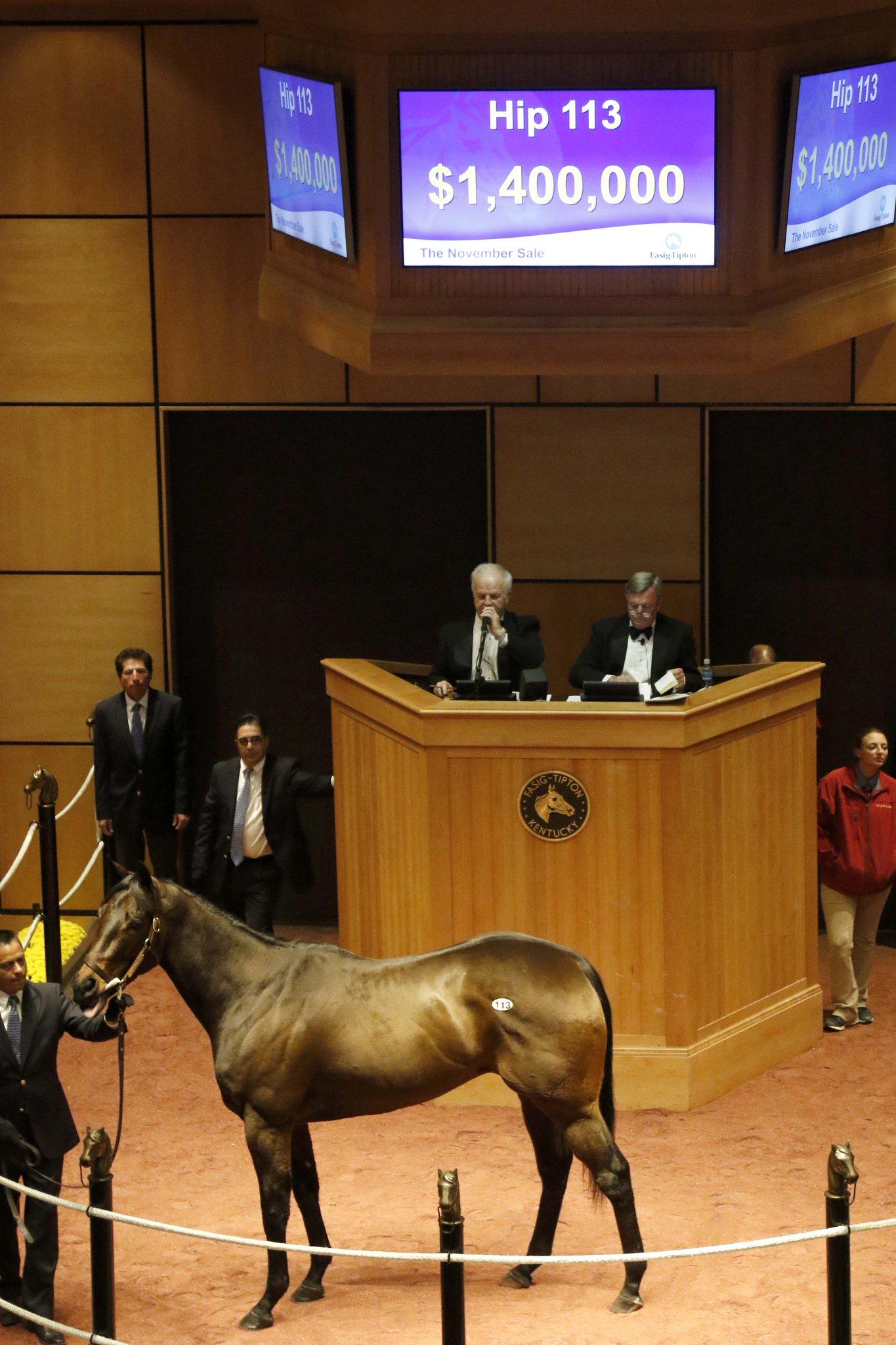 Million-dollar Maryland-bred mares at Fasig-Tipton - Maryland Horse