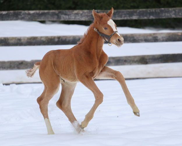 Colt by Friesan Fire out of Holy Beast