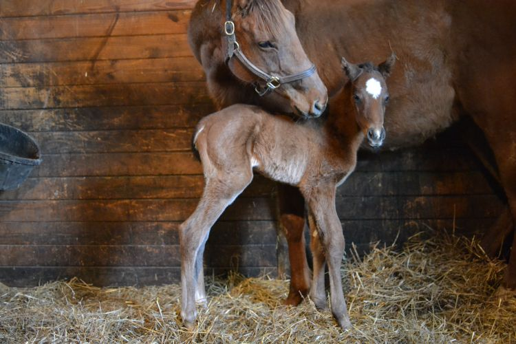 Bay filly out of Shadowofyourwings, by Outflanker